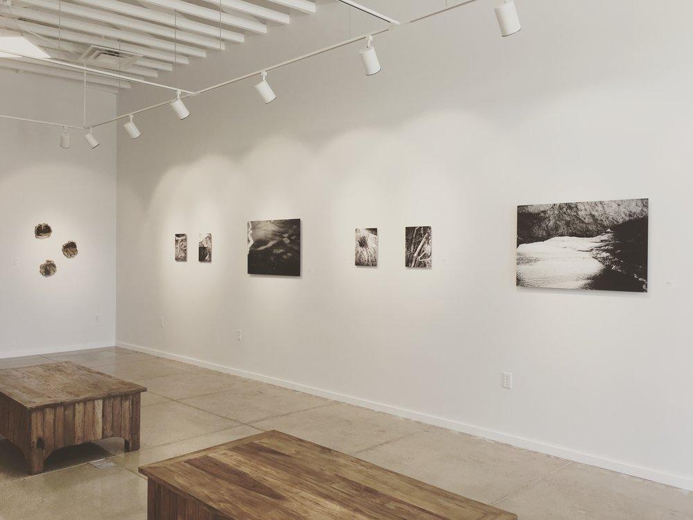 Exhibition view of  Naturelust