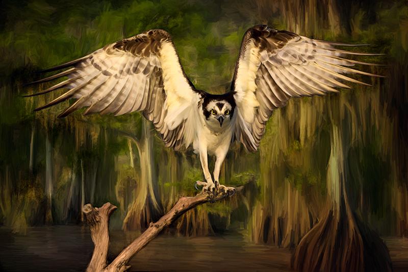 Osprey's Lair