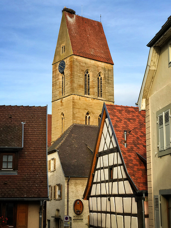 Stork nests are commonplace in Alsace
