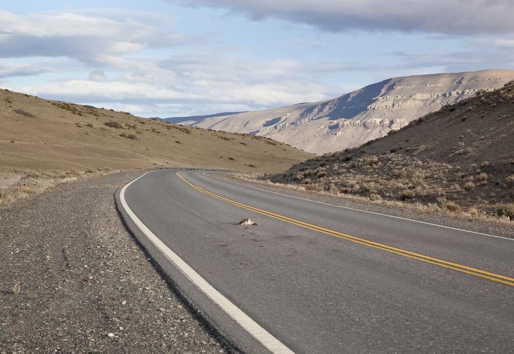 Patagonian steppe -1_o.jpg