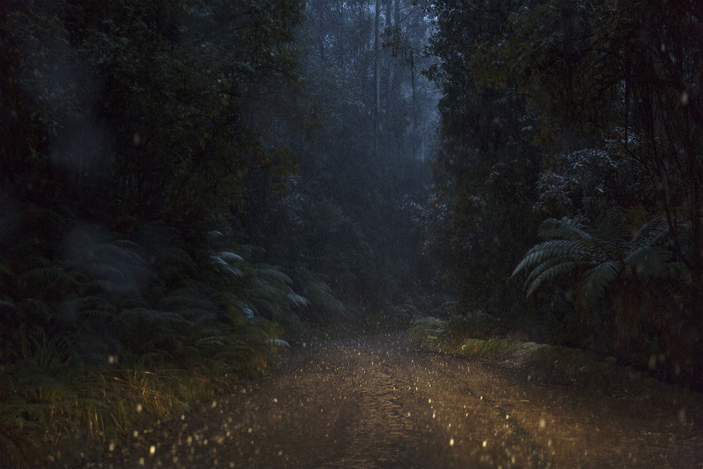 Lucid   Snow and rain illuminated by headlights in the Tasmanian forest.