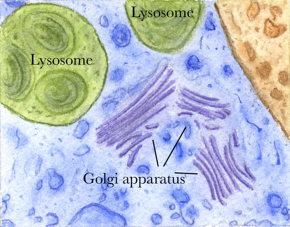 Parts of a cell. Labeled.