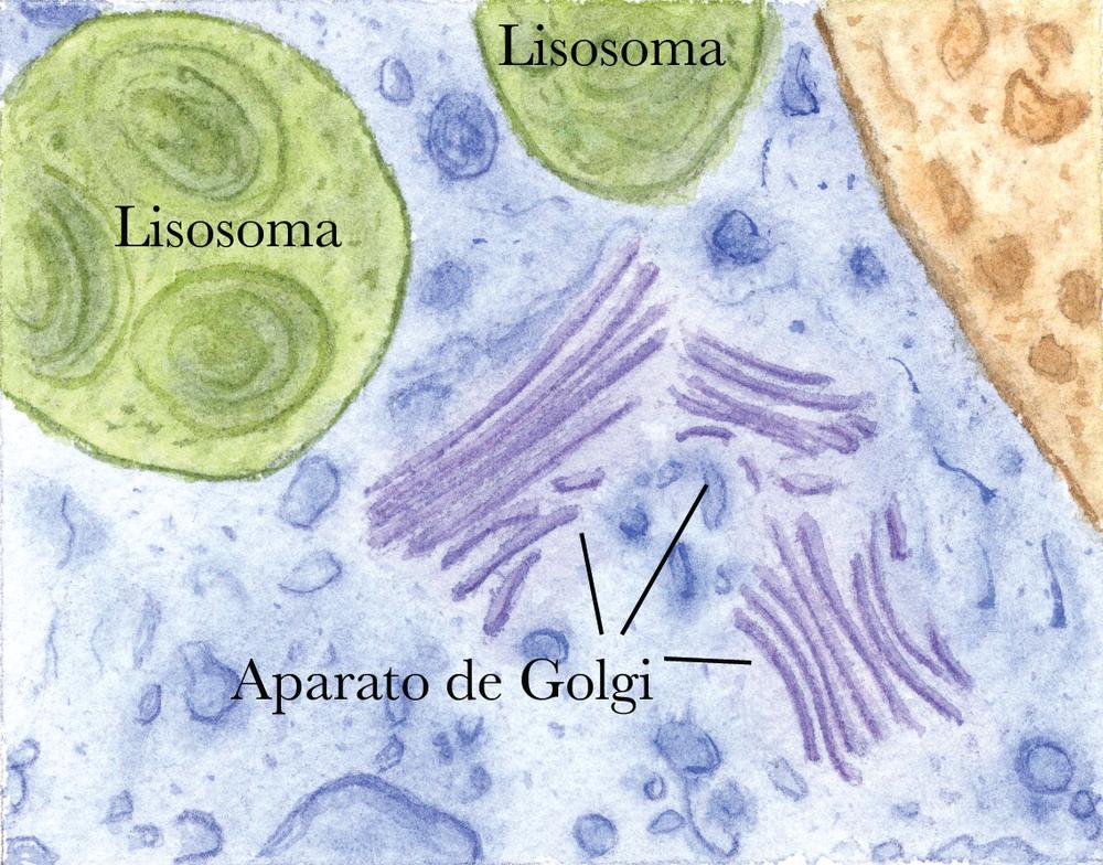 Partes de la célula con nombres.