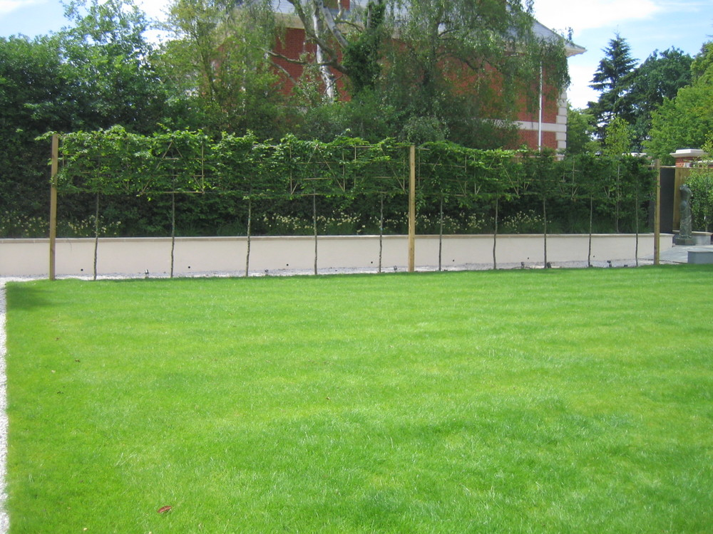 Landscaped Lawn Photo