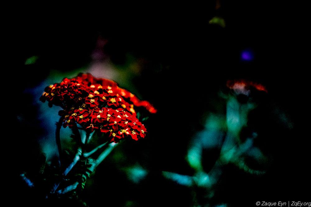 Flowers 4-2.jpg