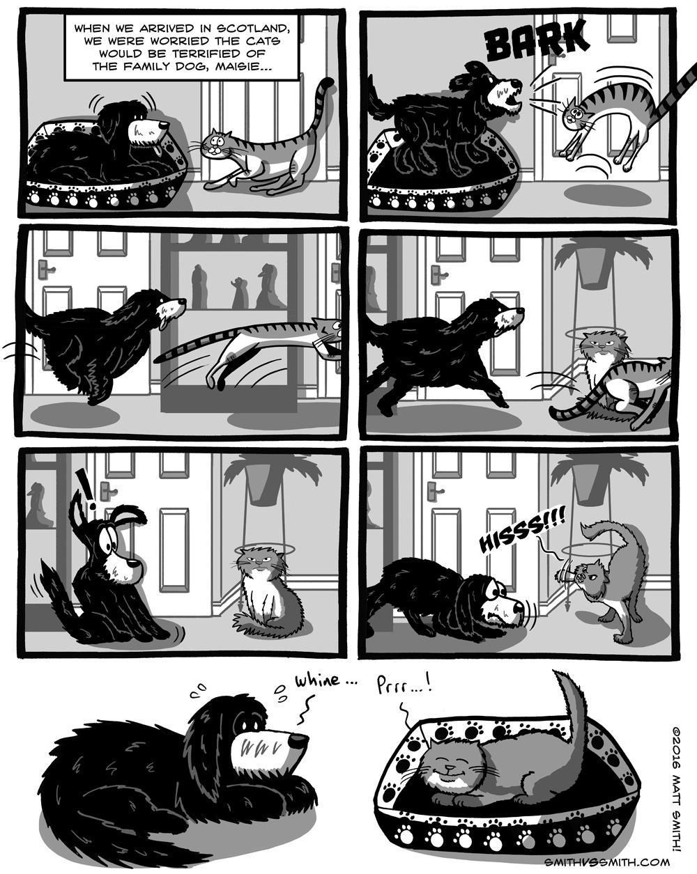 catsanddog
