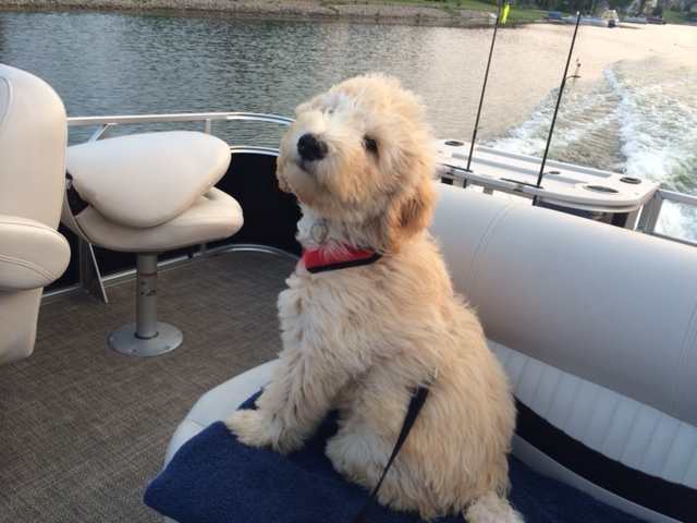 """We named him Yogi Bear.  He is learning to swim and went on his first boat ride Friday.  We are crazy about him!""-- Teresa--Northern Indiana"