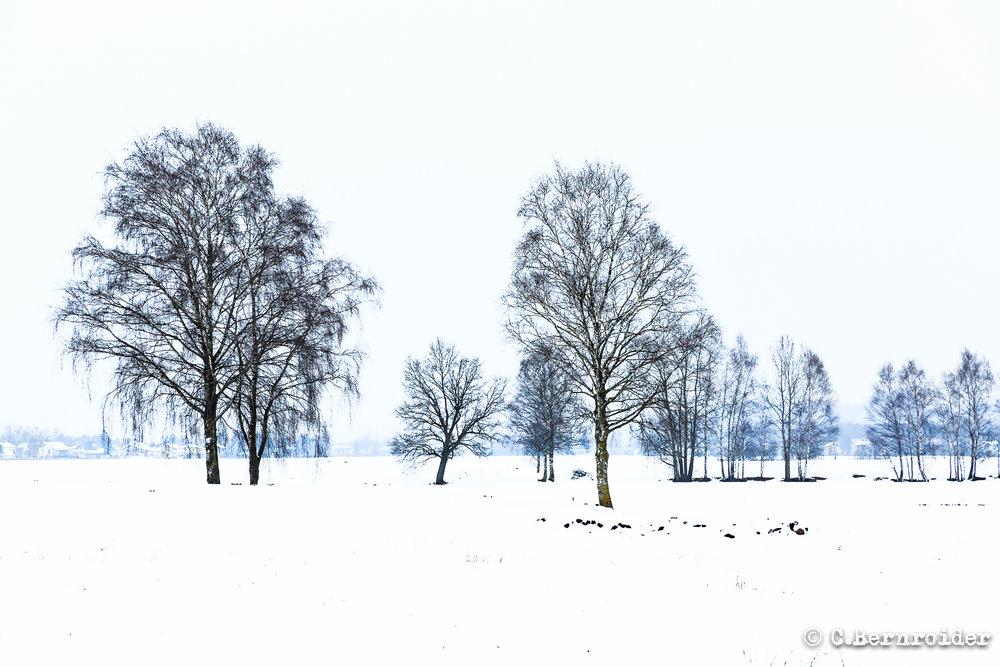 20170125_Kraeuterhofweg-2.JPG