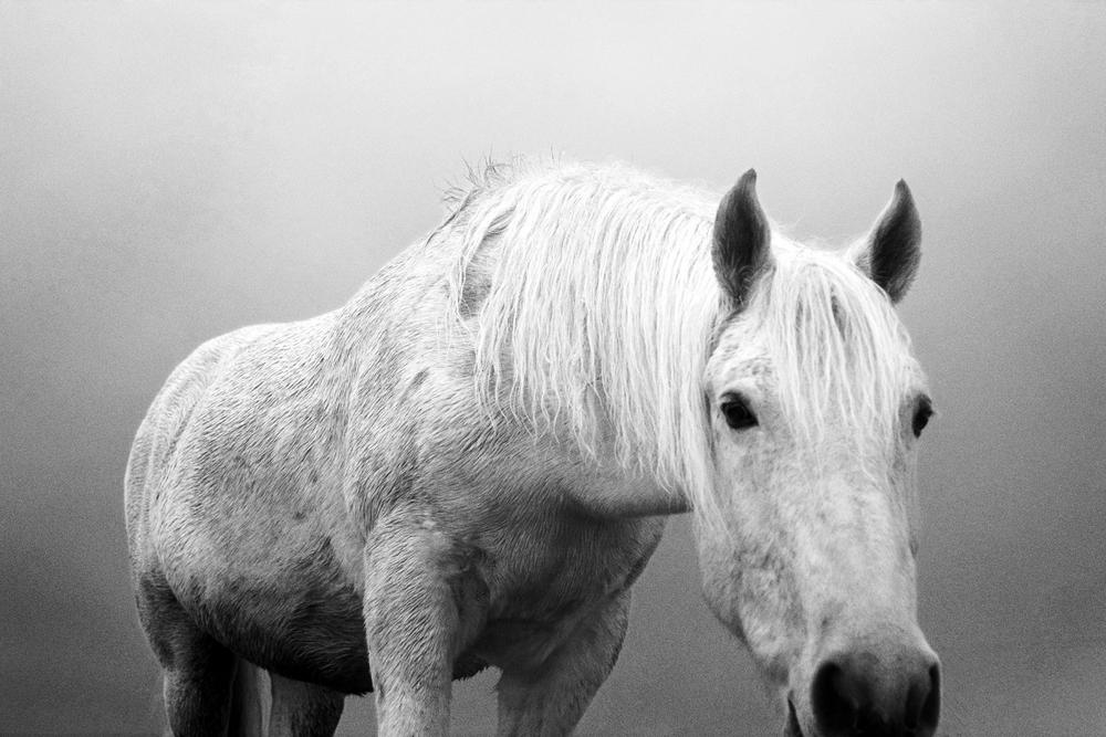 horse14.jpg