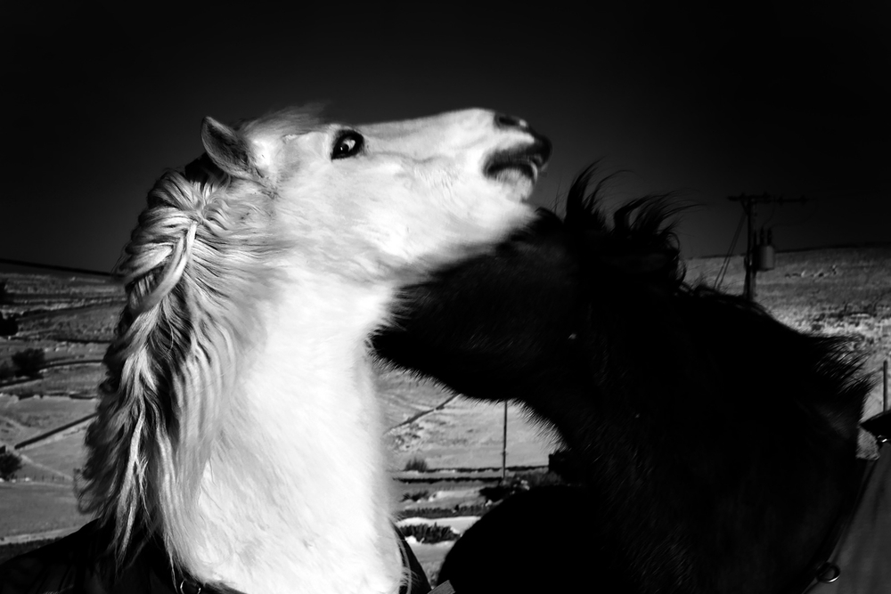 horse25.jpg