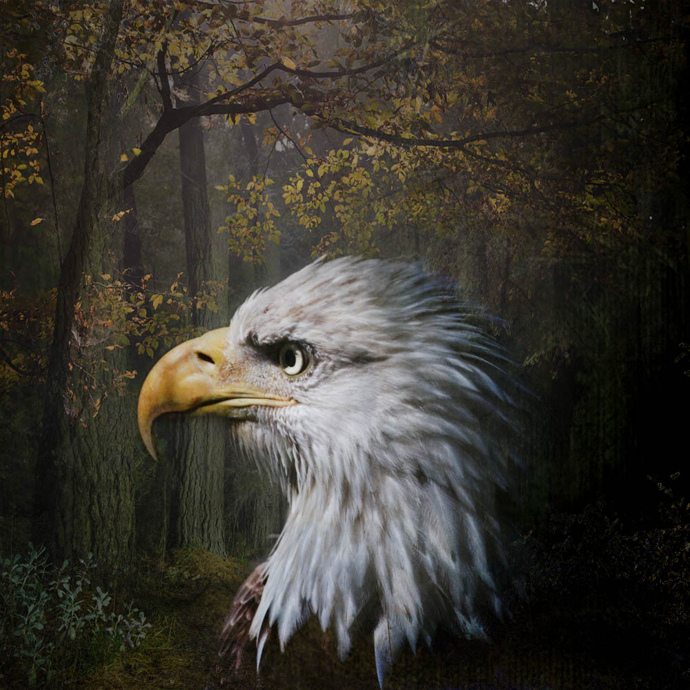 eagle composite-4.jpg