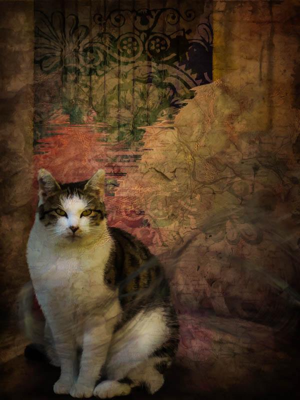 cat tapestry-2.jpg