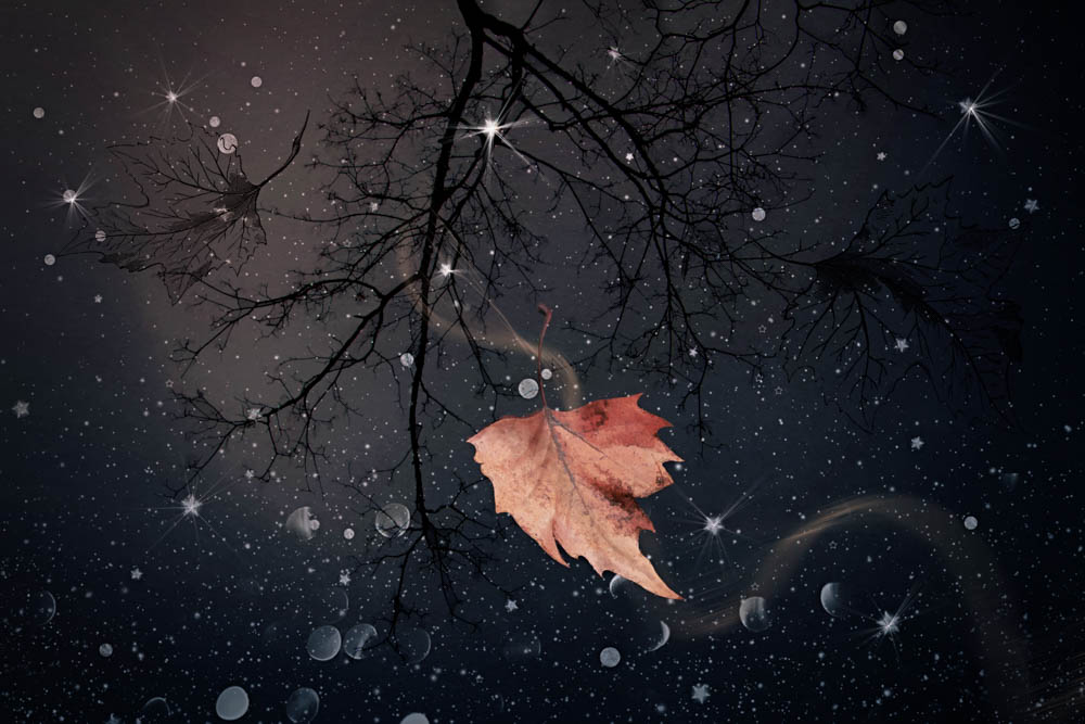 dreams of falling.jpg