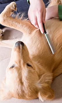 Dog Shedding Tips