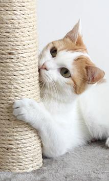 Cat Scratching My Furniture