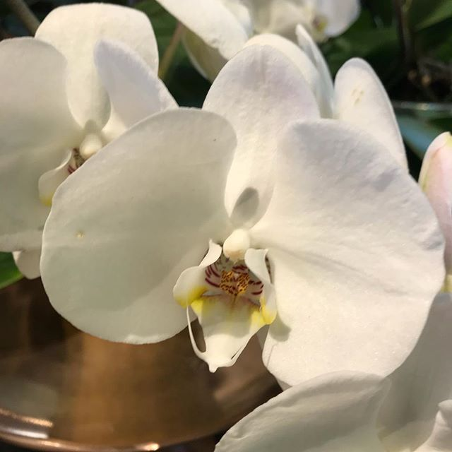 Orchids make us smile  and make a beautiful gift  #orchids #livinggifts #livingwithplants flowergifts #giftguide  #hamptonsstyle #gardeninspired