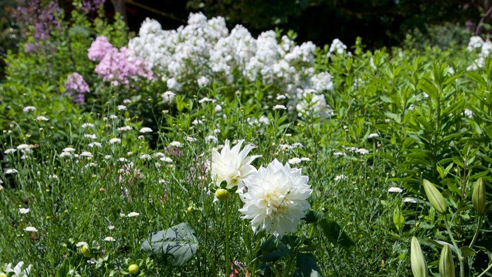 Marders Gardens_July 20 2010_-334.jpg