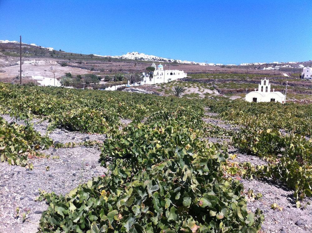 Santorini-Wine-Tasting-6.jpg