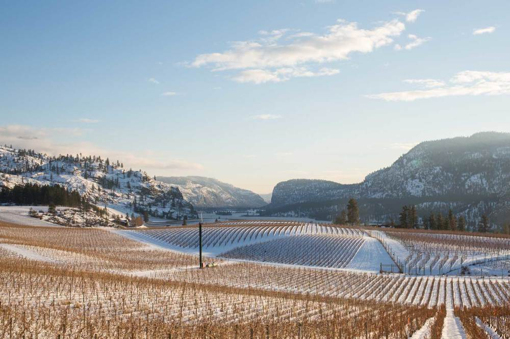 Blue-Mountain-Winery-Okanagan-2.jpg
