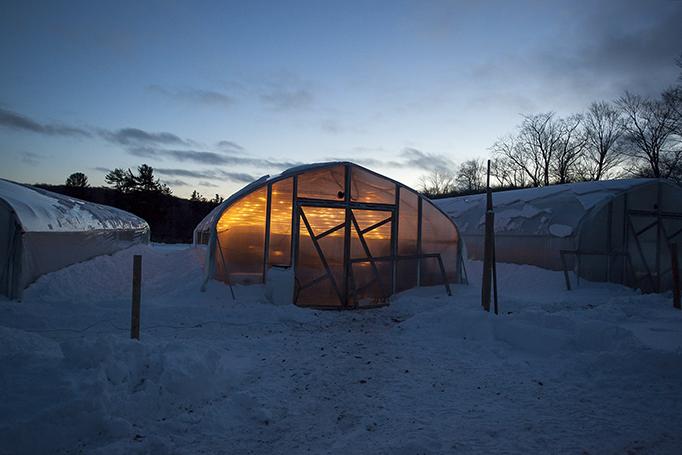 greenhouse_wb_14.jpg