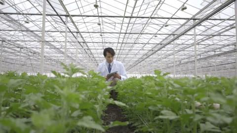 146010476-apple-ipad-greenhouse-chinese-crouching.jpg