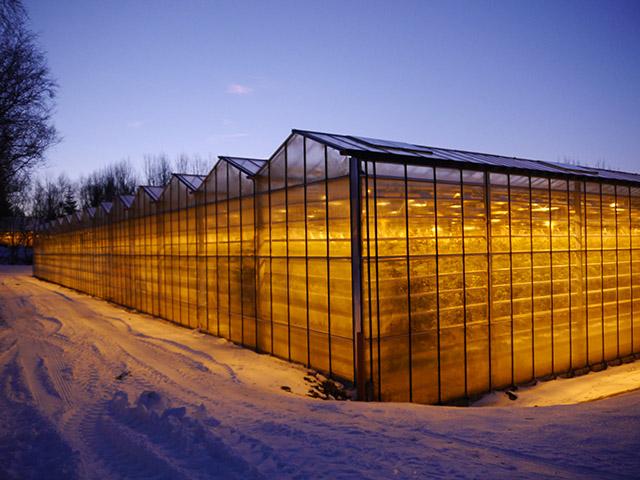 Greenhouse-Iceland.jpg