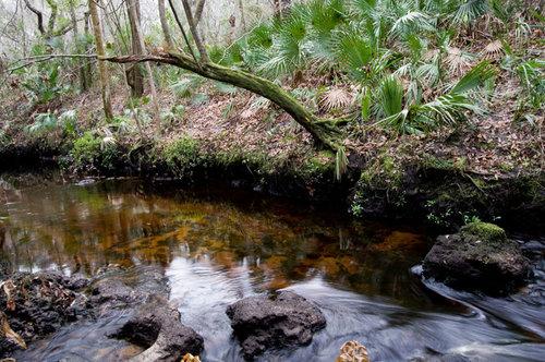 alafia-river-small-rapids.jpg