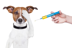 Our Recommended Vaccination Schedule for Dogs, Cats, Puppies and Kitten