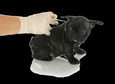 Puppy vaccine