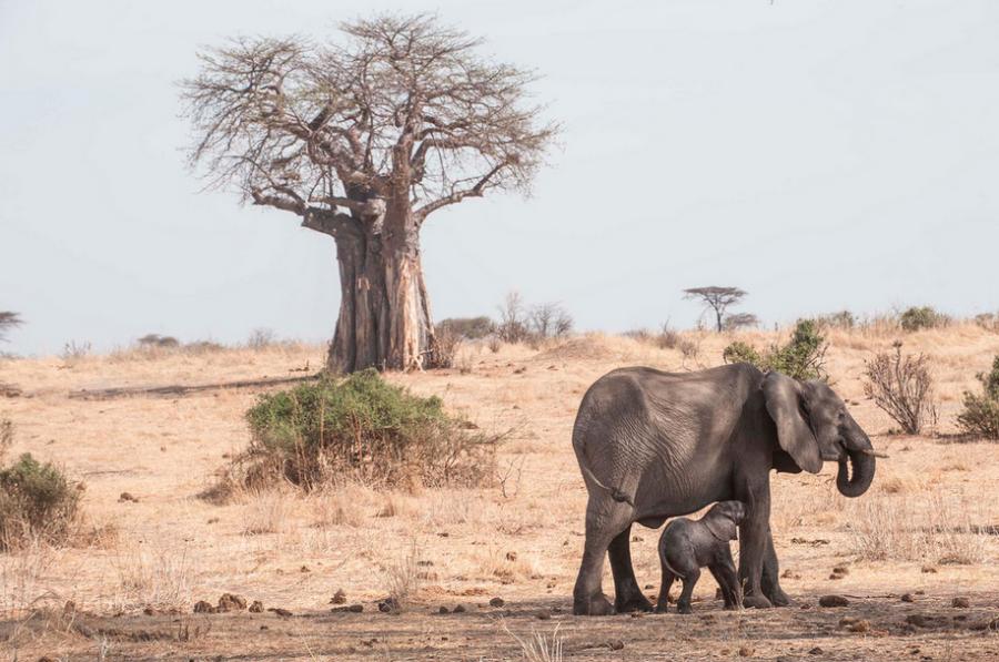 Photos: Nomad Tanzania