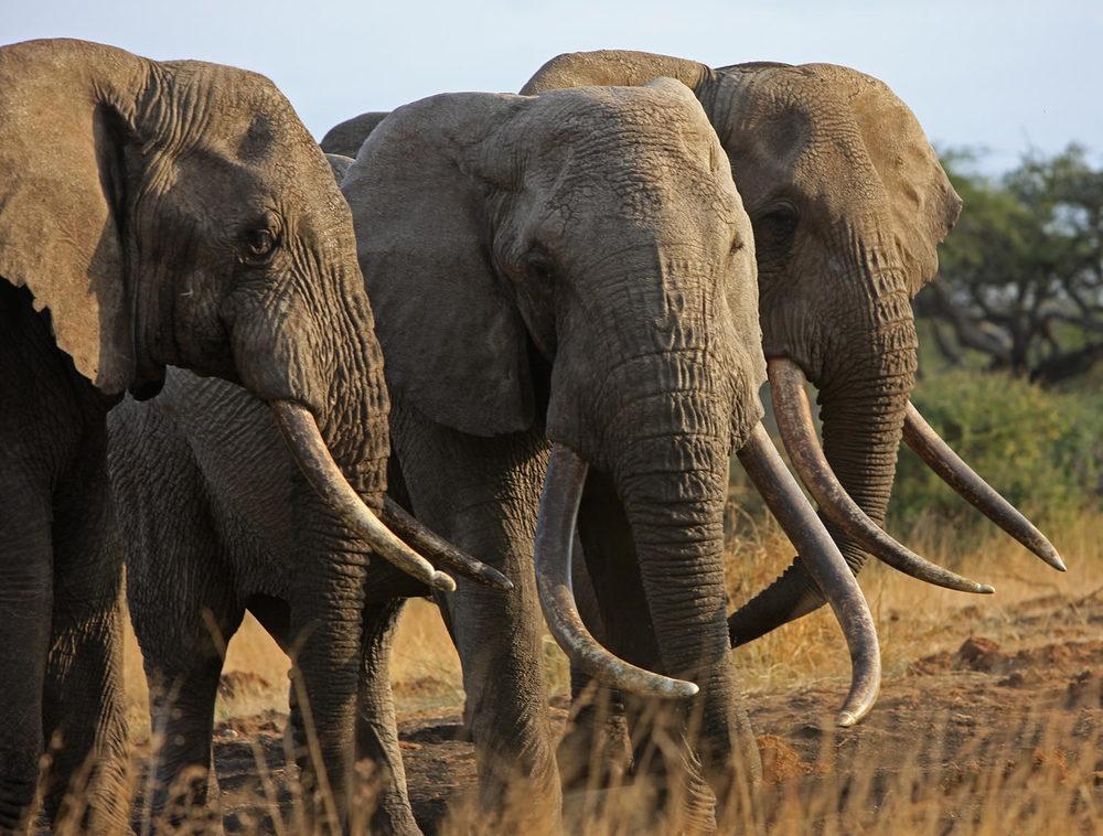 OlDonyoWuas_ElephantsUpClose_May2009.jpg