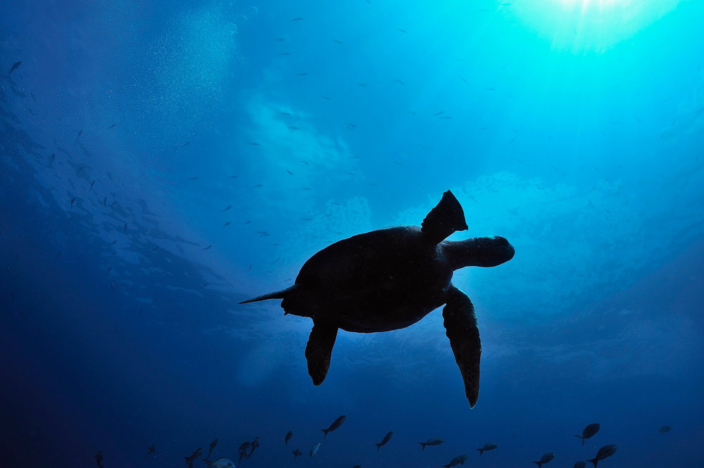 Wildlife GSC (5).jpg