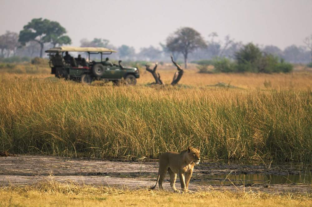 _Copyright_Beverly_Joubert_Duba_Safari_Botswana_3969.jpg