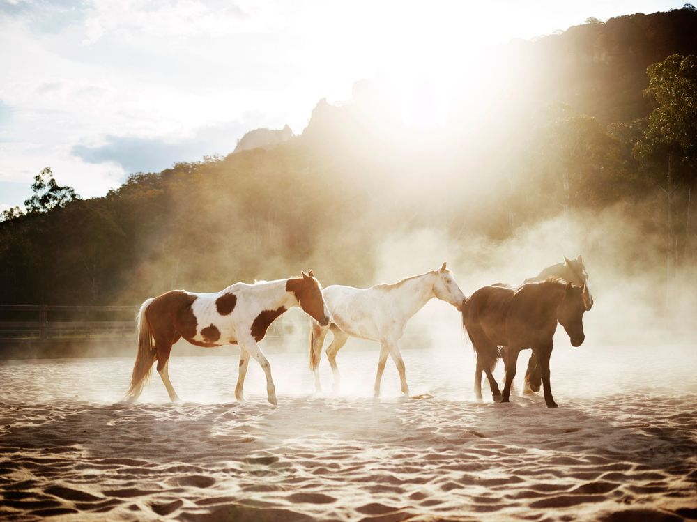 emirates-oneonly-wolgan-valley_blue-mountains_wild-horses-stable-experience.jpg