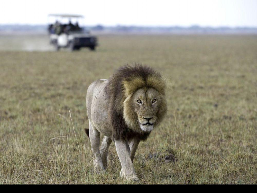 Dana Allen lion.jpg