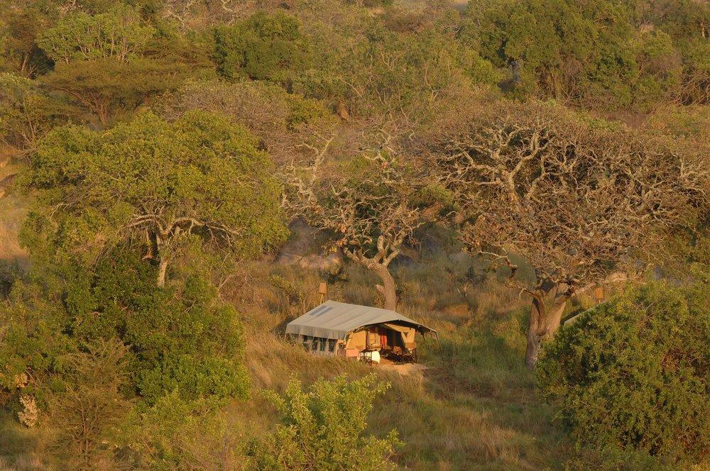 Lamai+Serengeti+(4).jpg