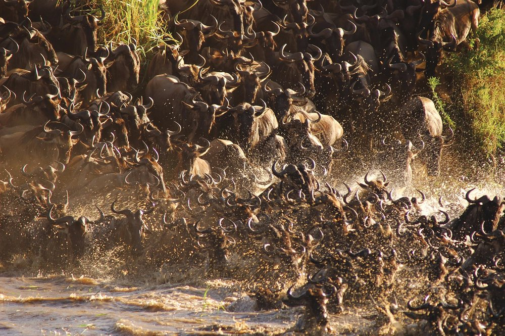 Ubuntu-North-Mara-River-Crossing.jpg