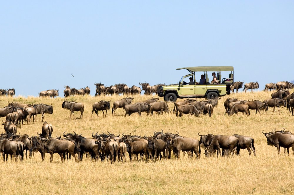 Ubuntu-Wildebeest-migration-game-drive-4.jpg