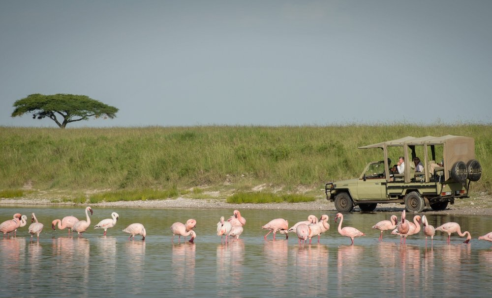 Dunia-Camp-guests-game-drive-flamingoes-HR-Eliza-Deacon.jpg