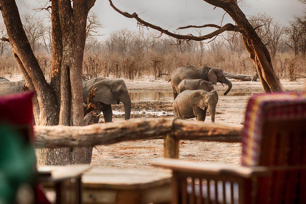 Hyena Pan - Deck & Ele's.jpg