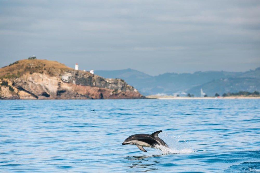 NZ dolphin tour.jpg