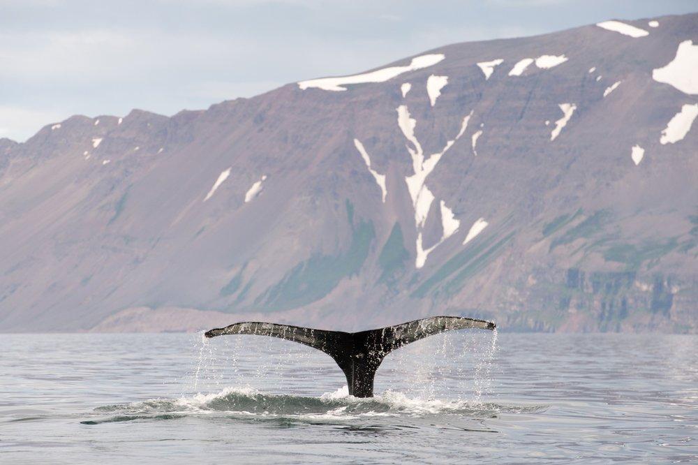 Iceland_Water_4.jpg