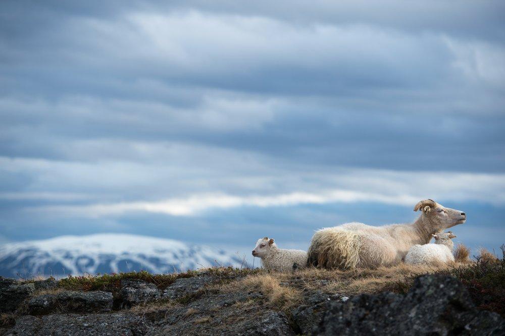 Iceland_Scenic_4.jpg