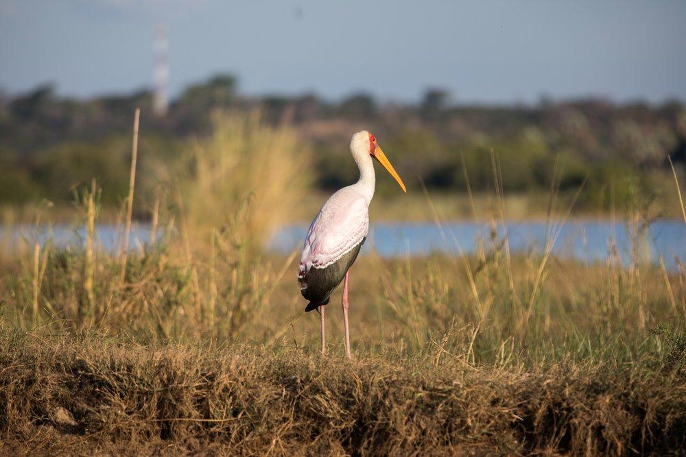 Africa - Zambia-8856.jpg