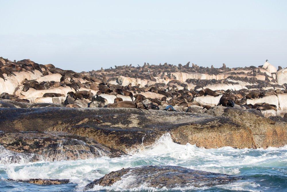 Africa - Cape Town-0652.jpg
