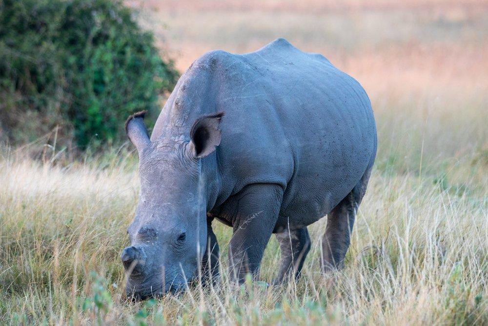 Africa - Botswana-2700.jpg