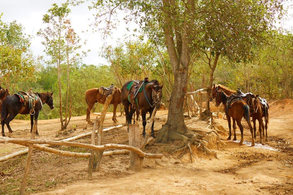 CUBA_CANDELA_VINALES_HORSES.jpg