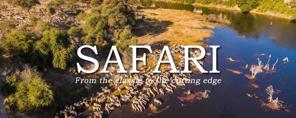 BANNER_safari_ZEBRAS.jpg
