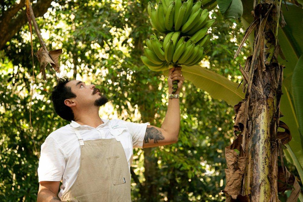 Isla Palenque-Garden 7.jpg
