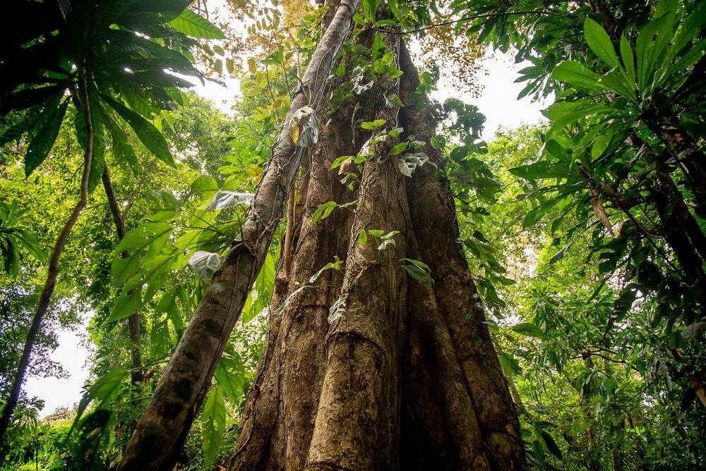 Isla Palenque-Island Hike 2.jpg